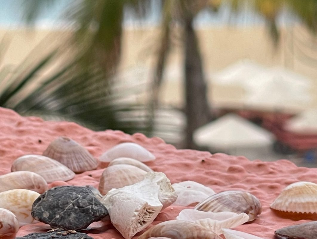 small sea shells with palm trees in the background